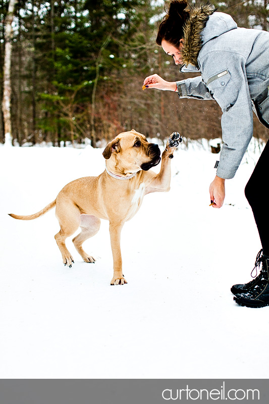 Sault Ste Marie Pet Photographer - Koy Dog's Life - winter, dog, mastiff