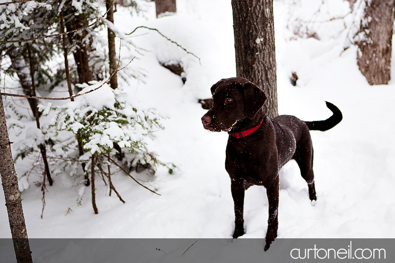 Sault Ste Marie Engagement Shoot - Krista and Brian - Fort Creek, winter, snow storm, dog