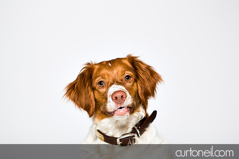 Sault Ste Marie Pet Photographer - PAWsome Booth 2012 - dogs, pawsome, pet photography