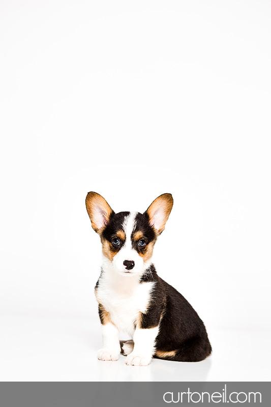 Sault Ste Marie Pet Photographer - PAWsome Booth 2012 - pet portraits