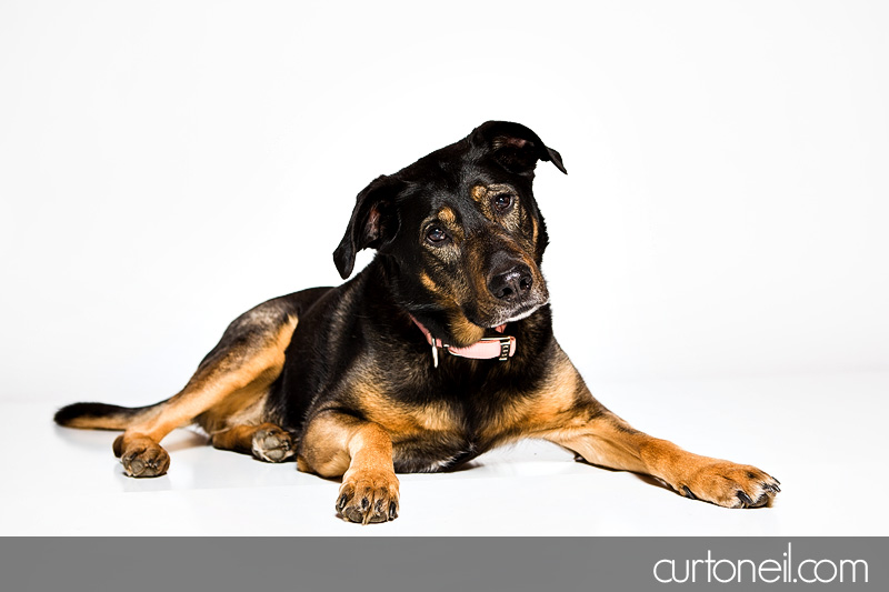 Sault Ste Marie Pet Photographer - PAWsome Booth 2012 - pet portraits